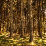 あなたの仕事はジャングルで木を切ることですか?