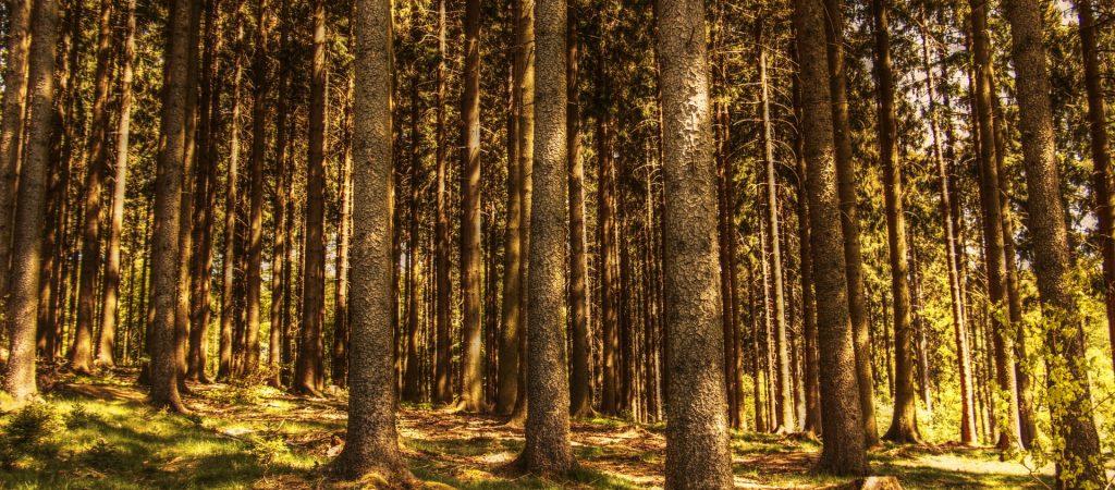 trees-3410830_1920
